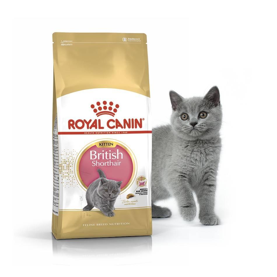 ROYAL CANIN BRITISH SHORTHAIR KITTEN – сухой корм для котят породы британская короткошерстная
