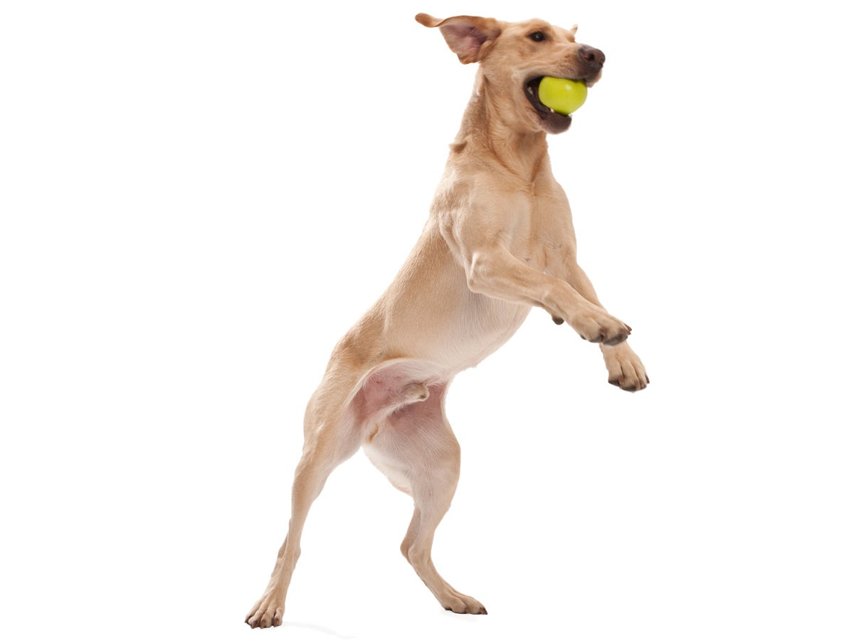 West Paw Jive Dog Ball Small – м'яч для собак