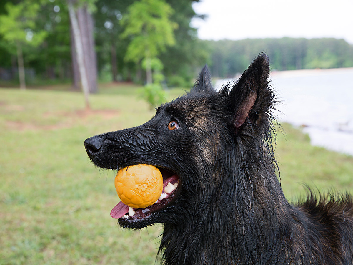 Boz Air Dog Ball S – мяч для собак