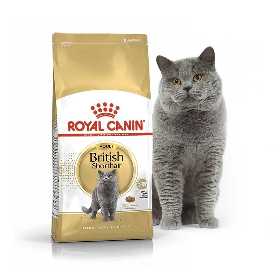 ROYAL CANIN BRITISH SHORTHAIR ADULT – сухий корм для дорослих котів породи британська короткошерста