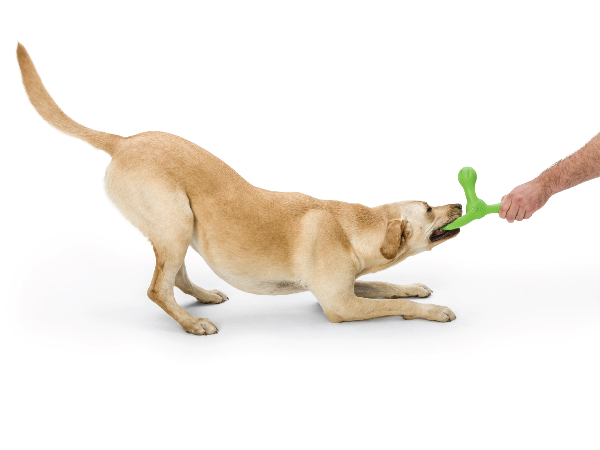 Skamp L – іграшка для собак