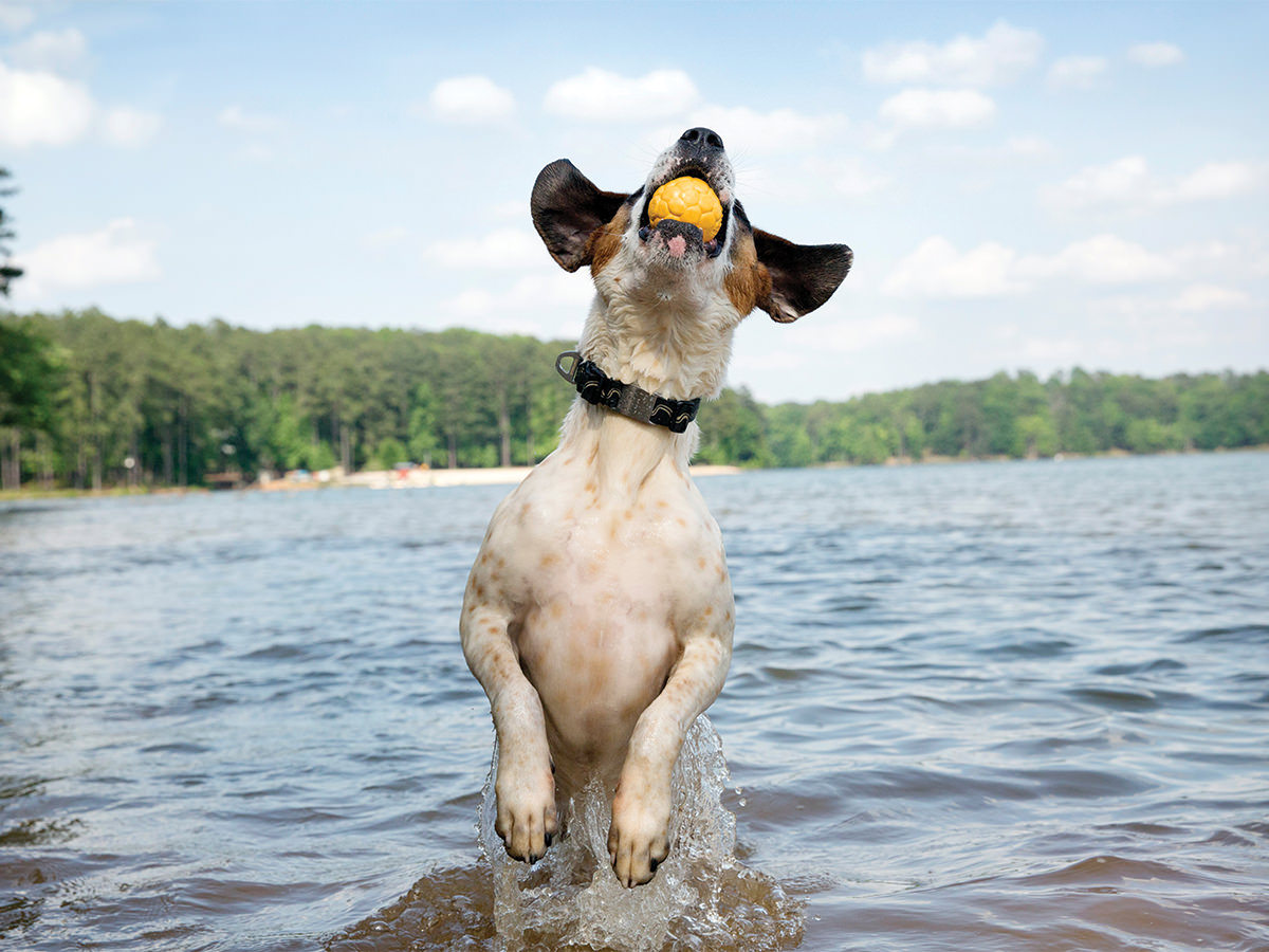 Boz Air Dog Ball L – м'яч для собак