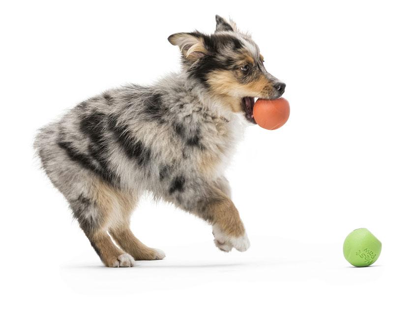 West Paw Rando L – м'яч для собак