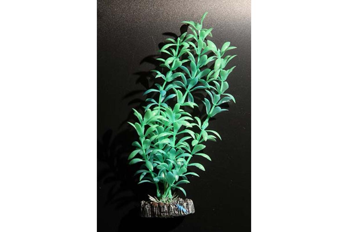 Aquatic Plants акваріумні рослина флуоресцентне