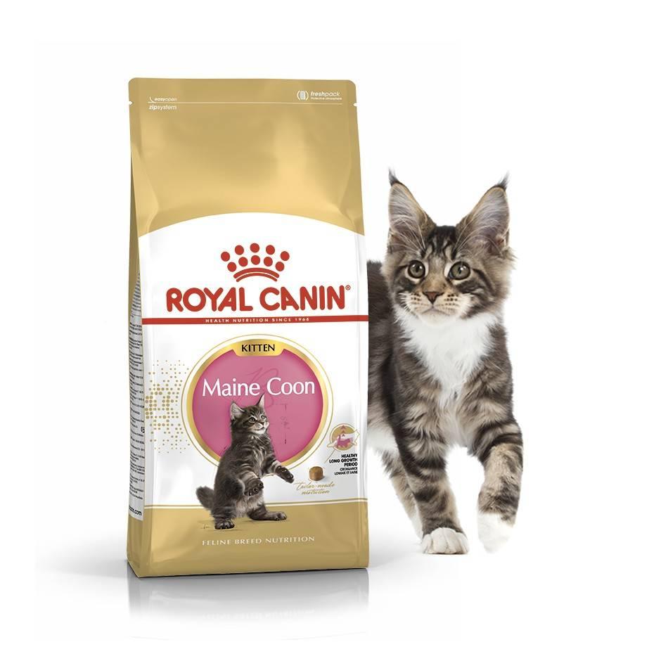 ROYAL CANIN MAINE COON KITTEN – сухий корм для кошенят породи мейн-кун