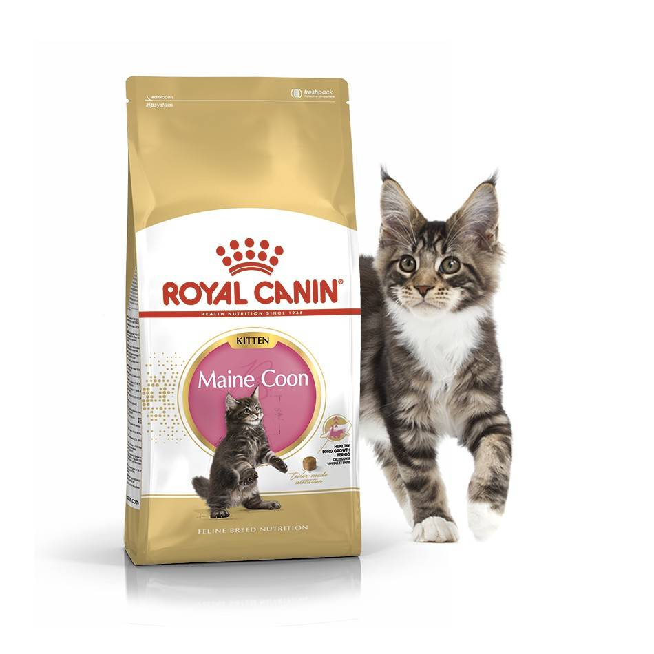 ROYAL CANIN MAINE COON KITTEN – сухий корм для кошенят породи мейн-кун